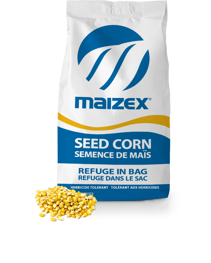 Maizex Seeds Inc  | Your Trusted Seed Partner