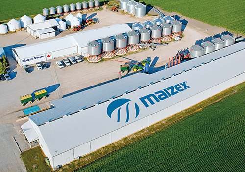 Maizex Seeds Expanding Seed Corn Production in Canada