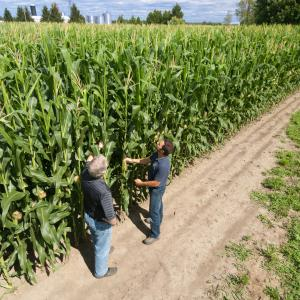 Chad and Goerge on the corn field