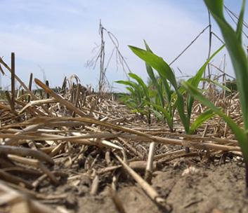 Cover crops and no till strategies