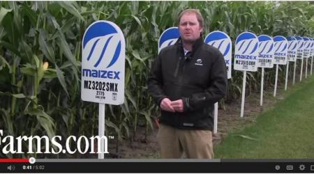 Late season corn disease scouting tips screenshot
