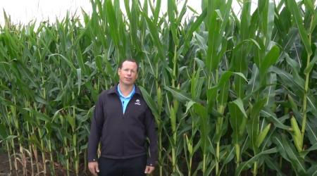 Maizex Territory Manager Kirk Van Will in a corn field