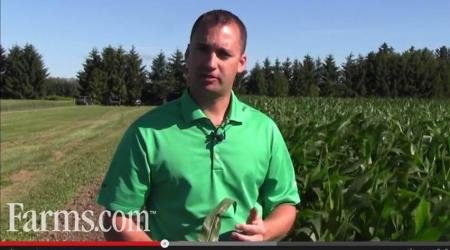 Man in front of corn field discussing scouting for corn leaf disease