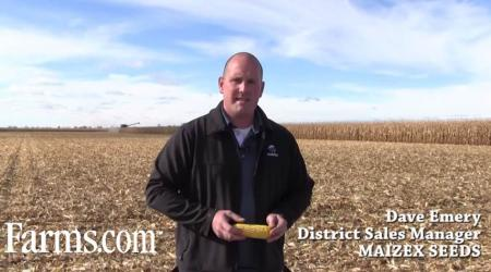 What to expect with the 2014 Corn Harvest